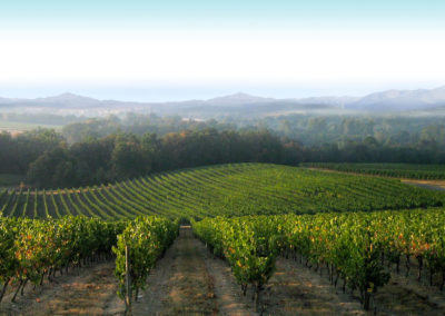 GERS_FUMÉES-BLANCHES_VINEYARDS-(2)