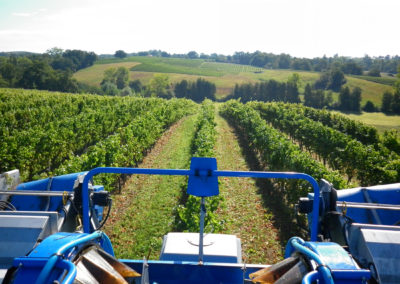 GERS_FUMÉES-BLANCHES_VINEYARDS-(6)-2